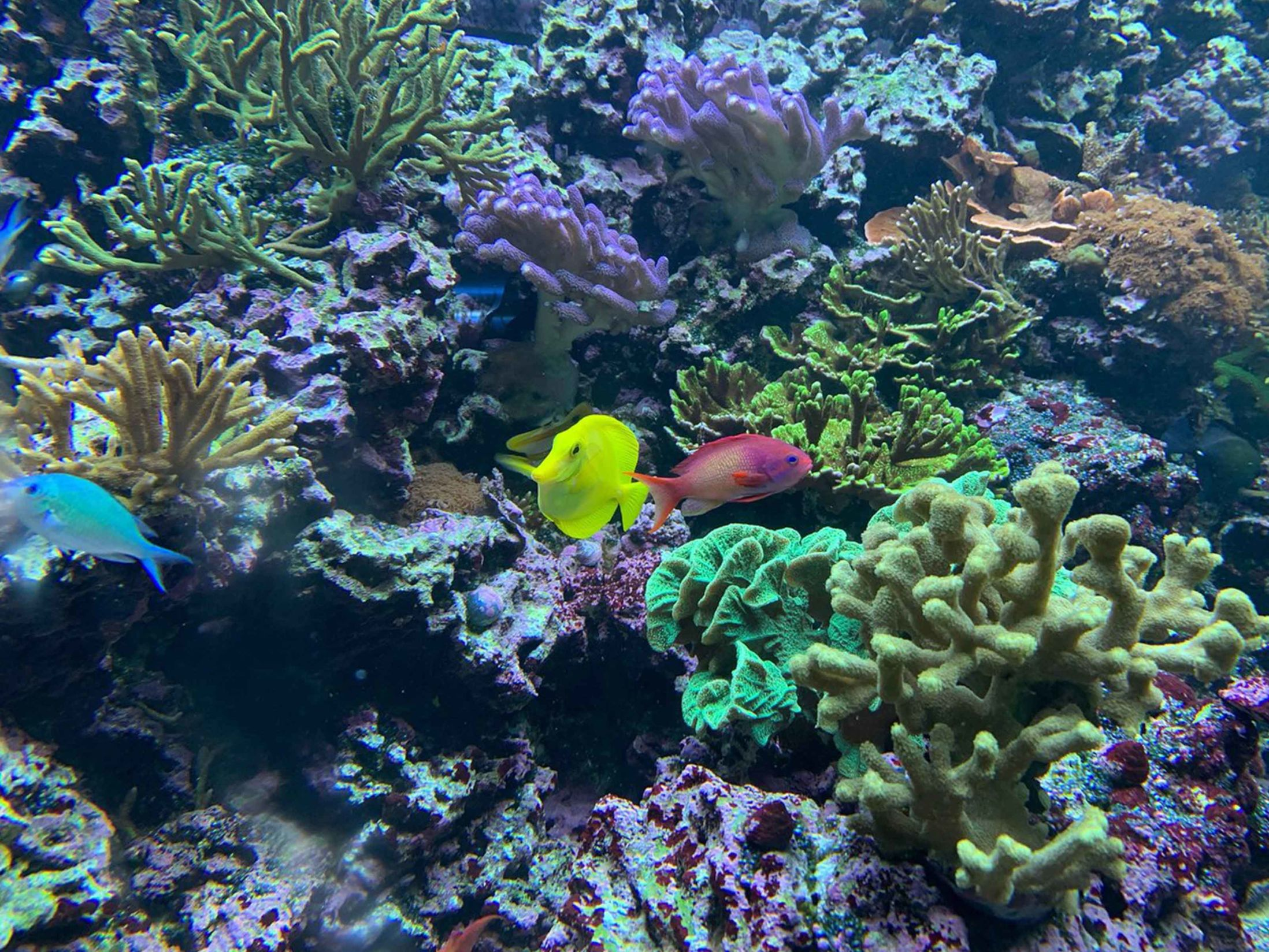 Things To Do in Brighton - SEA LIFE Brighton