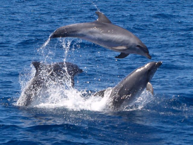 Dolphin Spotting Cruise