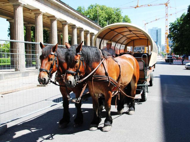 Horse Coach Tour with Bubbly